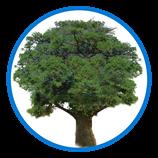 http://convocation.cityu.edu.hk/newcms/wp-content/uploads/2018/02/Tree-Member.png